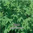 Repík lekársky-Topas - semená 1 g