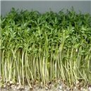 Zdravé klíčky - žerucha - Bio klíčky - semená 33g