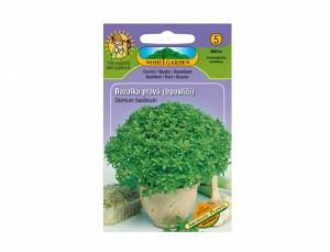 Bazalka pravá trpasličí Aromatic plants