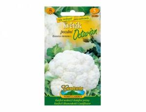 Karfiol neskorý Octavian 70 semien