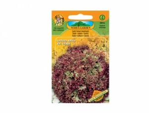 Salát listový kadeřavý Leaf vegetables 50 semen