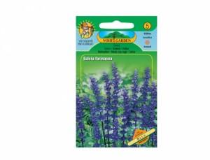 Šalvia Blue 60 semien