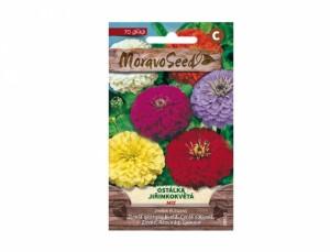 Ostálka jiřinkokvětá mix 70 semen