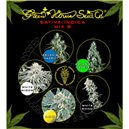 Sativa/Indica Mix B - semena 10 ks feminizovaná semena Green House Seeds