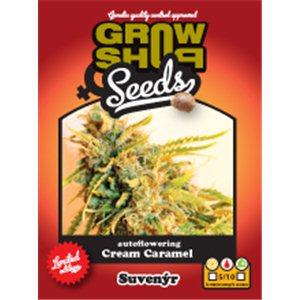 Cream Caramel 5 fem. a samonakvétací semien Growshop