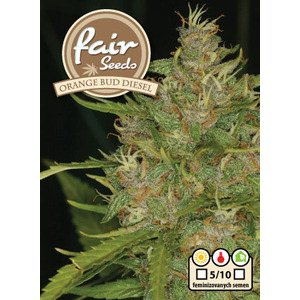 Orange Bud Diesel 5 feminizovaných semen Fair Seeds