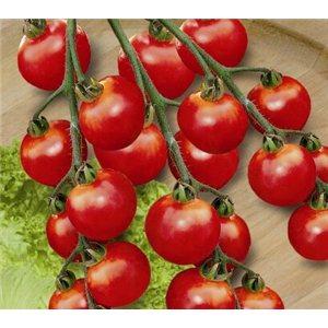 Rajčata Cherrola