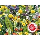 Voňavé kvety pre maškrtníkov