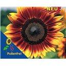 Slunečnice -Helianthus Pro Cut Bicolor