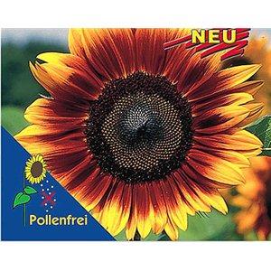 Slunečnice - Helianthus Pro Cut Bicolor