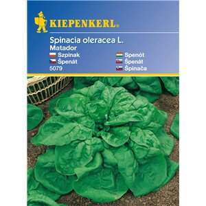Špenát Matador KK - semená špenátu