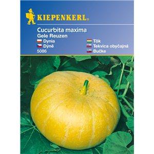 Tekvica Gele Reuzen - semená tekvice