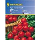 Reďkovka Saxa 3 - semená reďkoviek