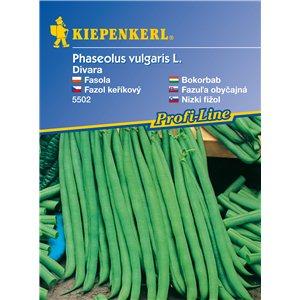 Kríčková fazuľa Divar - semená fazule