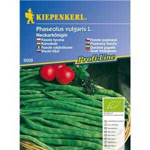 Popínavá fazole Neckarkönigin BIO - semena fazole BIO