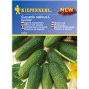 Uhorka nakladačka Excelsior - semená uhorky nakladačky