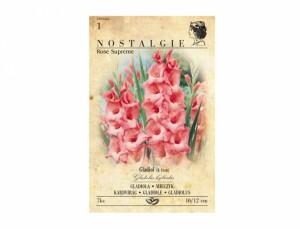Gladiolus JESSICA / ROSE SUPREME 7ks