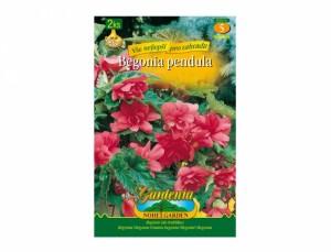 Begonia PINK 2ks