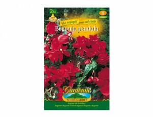 Begonia RED 2ks