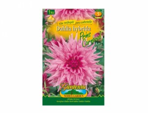 Dahlia AMERICAN DRE / PRINS CARN.1ks