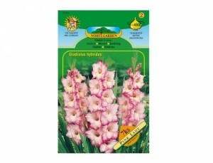 Gladiolus PRISCILLA/PINK LADY 7ks