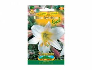 Lilium REGALE 1ks