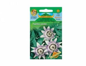 Mučenka ťahavá Flowers perennial 25 semien