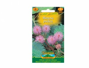 Citlivka růžová (Mimosa pudica )