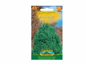 Pinus nigra / borovica čierna /