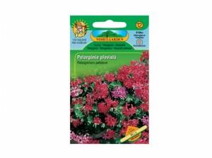 Pelargonium pel / muškát