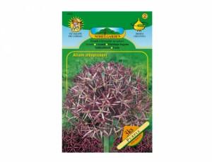 Česnek - Allium albopilosum