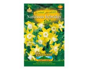 Narcis PIPIT