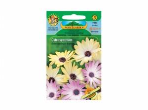 Osteospermum/osteospermem/sm