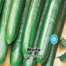 Uhorka šalátová skleníková F1 - Marta (zelenina: Cucumis sativus) 10 semien osiva uhorky