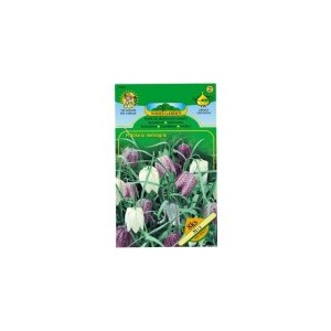Fritillaria - Řebčík