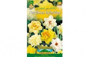 Narcis SMĚS