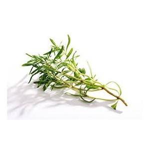 Saturejka jednoletá (Satureja hortensis) cca 200 semen