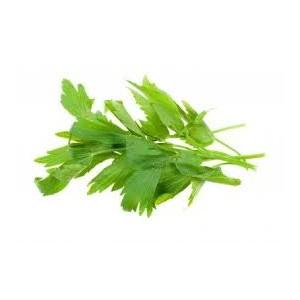 Libeček lékařský (Levisticum officinale) 50 semen