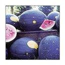 Meloun Moon&Stars - Cherokee ( prazelenina: Citrullus lanatus ) cca 10 semen