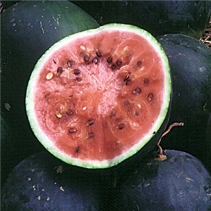 Meloun Small Shining - rudý ( prazelenina: Citrullus lanatus ) cca 10 semen