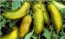 Rajče Green Sausage - zelené ( prazelenina: Solanum lycopersicum ) cca 15 semen