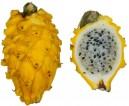 Pitaya žlutá (Hylocereus megalanthus) 7 semen