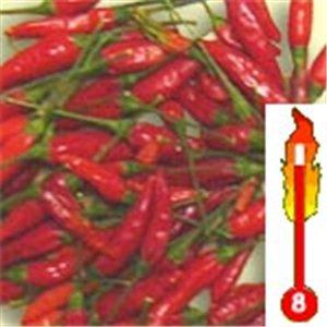 Chilli Malaga Bird (rastlina: capsicum) - semená čili 7 ks