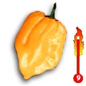 Chilli Big Sun (rastlina: capsicum) - semená čili 7 ks