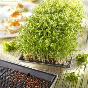 Ministet pro rostlinné klíčky + bio řeřicha 2x 5g