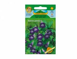 Asarina pnúcou Violet 60 semien