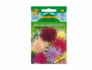 Astra čínska vysoká ihlicovitú Mix 150 semien