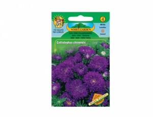 Astra nízká chryzantémokvětá Dark violet 150 semen