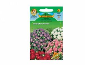 Astra nízka Průhonický trpaslík 120 semien
