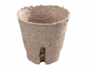 Květník rašelinový d6cm - zářez